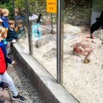 Embassy International School - Nursery & Reception Zoo trip May 2018 008