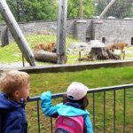 Embassy International School - Nursery & Reception Zoo trip May 2018 017