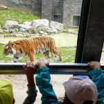 Embassy International School - Nursery & Reception Zoo trip May 2018 018