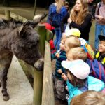 Embassy International School - Nursery & Reception Zoo trip May 2018 023