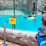 Embassy International School - Nursery & Reception Zoo trip May 2018 027