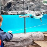 Embassy International School - Nursery & Reception Zoo trip May 2018 028