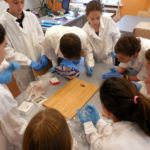 Embassy International School - Secondary Heart dissection May 2018 001