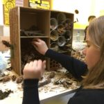 Embassy International School: Bug hotels yr 600005
