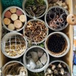 Embassy International School: Bug hotels00007