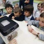 Embassy International School: Yr 1 Bees and insects00013