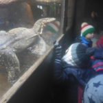 Embassy International School: Yr 1 Zoo trip00004