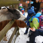 Embassy International School: Yr 1 Zoo trip00013