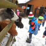 Embassy International School: Yr 1 Zoo trip00015