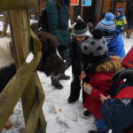 Embassy International School: Yr 1 Zoo trip00017