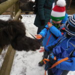 Embassy International School: Yr 1 Zoo trip00018