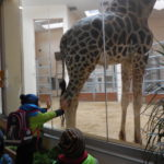 Embassy International School: Yr 1 Zoo trip00029