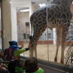 Embassy International School: Yr 1 Zoo trip00030