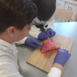 Embassy International School, Yr 7 Lung Dissection, April 2019-00006