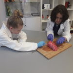 Embassy International School, Yr 7 Lung Dissection, April 2019-00008