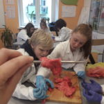 Embassy International School, Yr 7 Lung Dissection, April 2019-00009